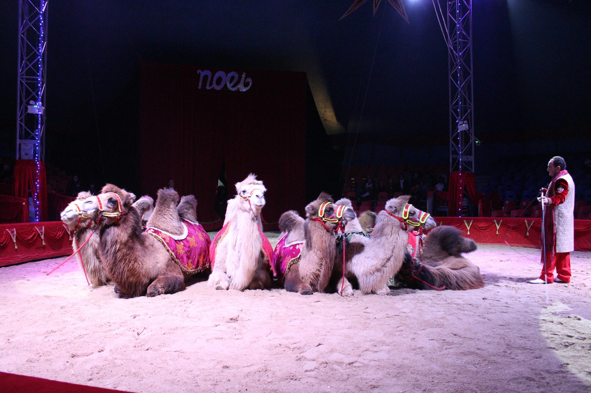 tous-les-chameaux